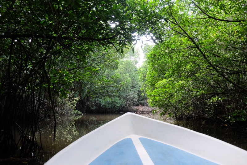 Navigating the mangroves of Moragalla