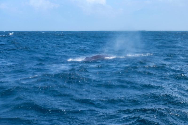 Whale-10