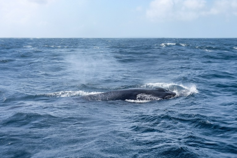 Whale-11