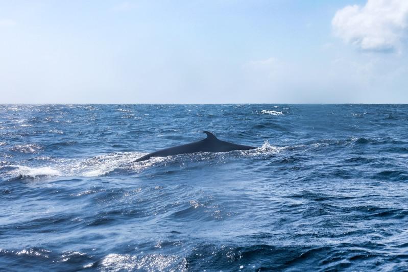 Whale-12