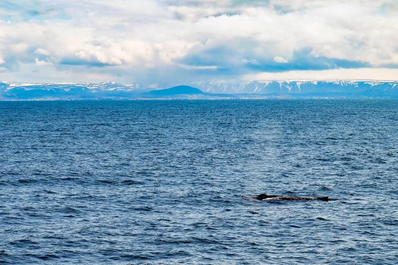 Whale-13