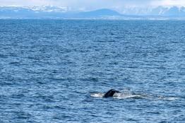 Whale-14