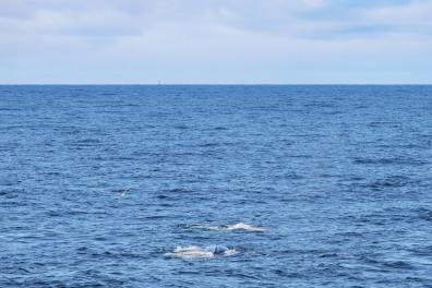 Whale-15