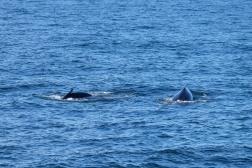 Whale-16