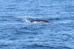 Whale-17