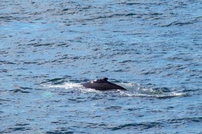 Whale-18