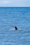 Whale-19