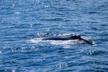 Whale-20