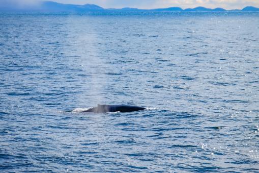 Whale-21