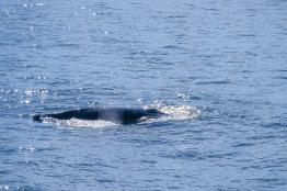 Whale-22