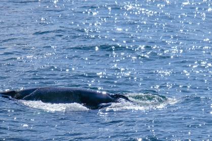 Whale-23