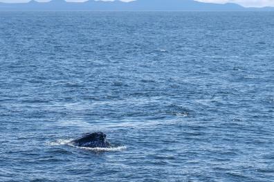 Whale-27