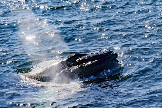 Whale-28