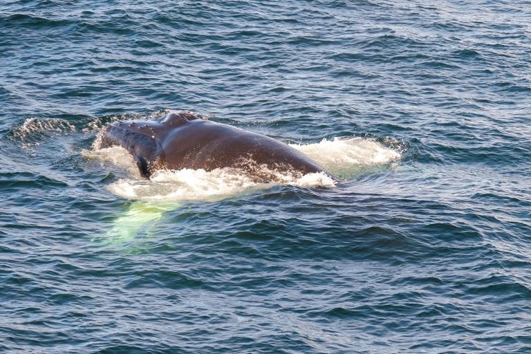 Whale-29