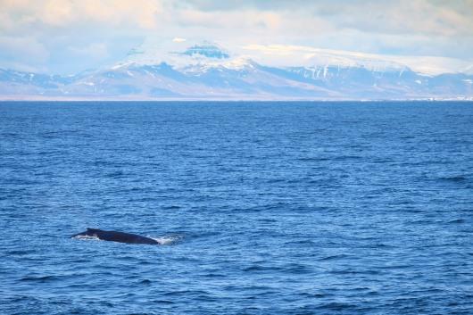 Whale-32