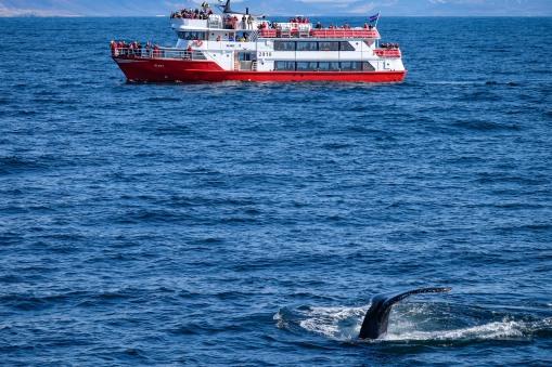 Whale-33